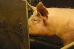 grisarna1010186_img