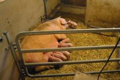 grisarna1010192_img