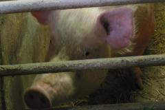 grisarna1010196_img