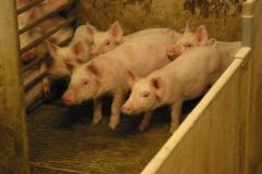 grisarna1010198_img