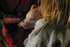 grisarna1010189_img