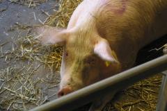 grisarna1010190_img