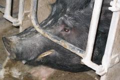 grisarna1020212_img